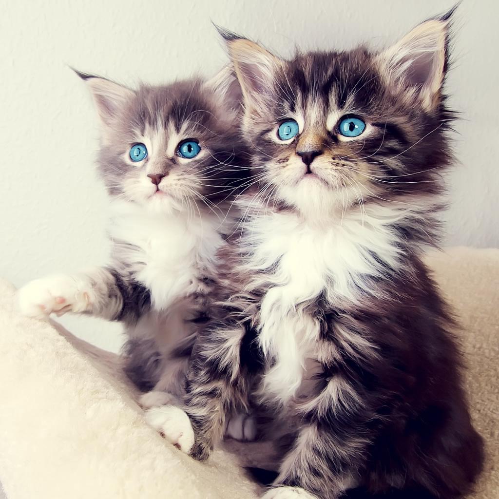 Cute Kittens ipad wallpaper ilikewallpaper